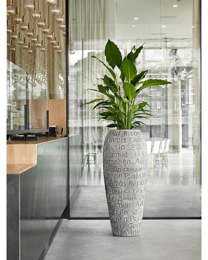 Spathiphyllum Sweet Sebastiano 110 cm
