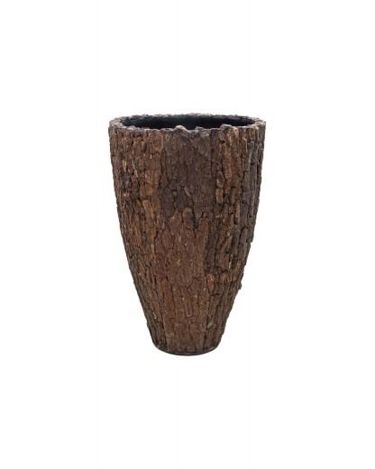 Redwood Cone