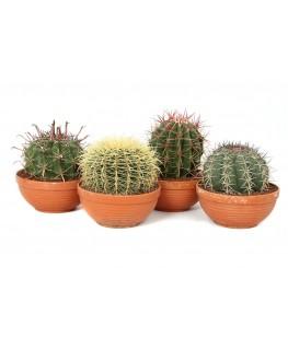 Cactus Mix Terracota 30 cm